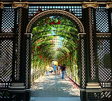 Walk among the roses by EricBARBEAU