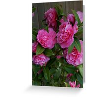 Camellias at Starbuck's Greeting Card