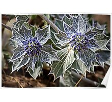 Sea Holly in fractalius Poster