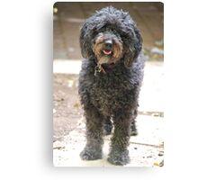 Ruby, the shaggy black dog Canvas Print