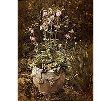 Vintage Planter Photographic Print