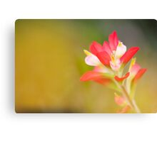 Paintbrush - Solitary Bloom Canvas Print