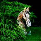 The wooden horse by missmoneypenny