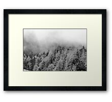 Black and white woods Framed Print