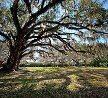 Avery Island Oaks by Bonnie T.  Barry