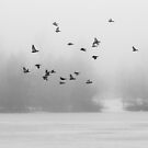 Pigeons in the Mist by Tracy Riddell