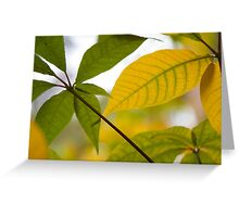 Lemon and Lime Greeting Card
