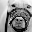 Muzzled Pooch (B&amp;W) by Bart Heird