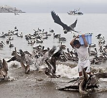 Birds take away from the fisherman of fish by xura