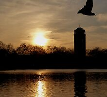 hyde park - sunset by Perggals© - Stacey Turner