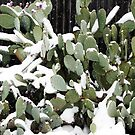 Frozen Cactus.... by wahumom