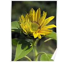 If I Listen Really Hard, I Swear I Can Hear The Sunflower Laughing With The Sun! Poster