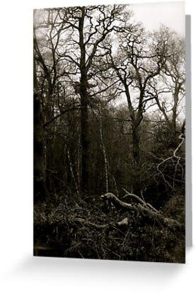 Trees by Richard Pitman