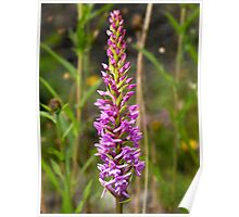 Fragrant Orchid Poster