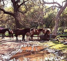 Horses gathered at a watering hole in Central California by Rick Short