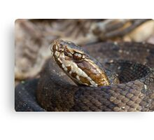 Water Moccasin Canvas Print