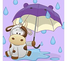 Silly cow under umbrella Photographic Print