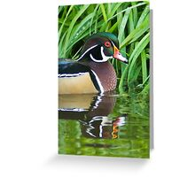 Wood Duck in the Reeds Greeting Card