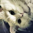 i-b-upside-down-kitty by ibjennyjenny