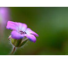 Freshness of Spring Photographic Print