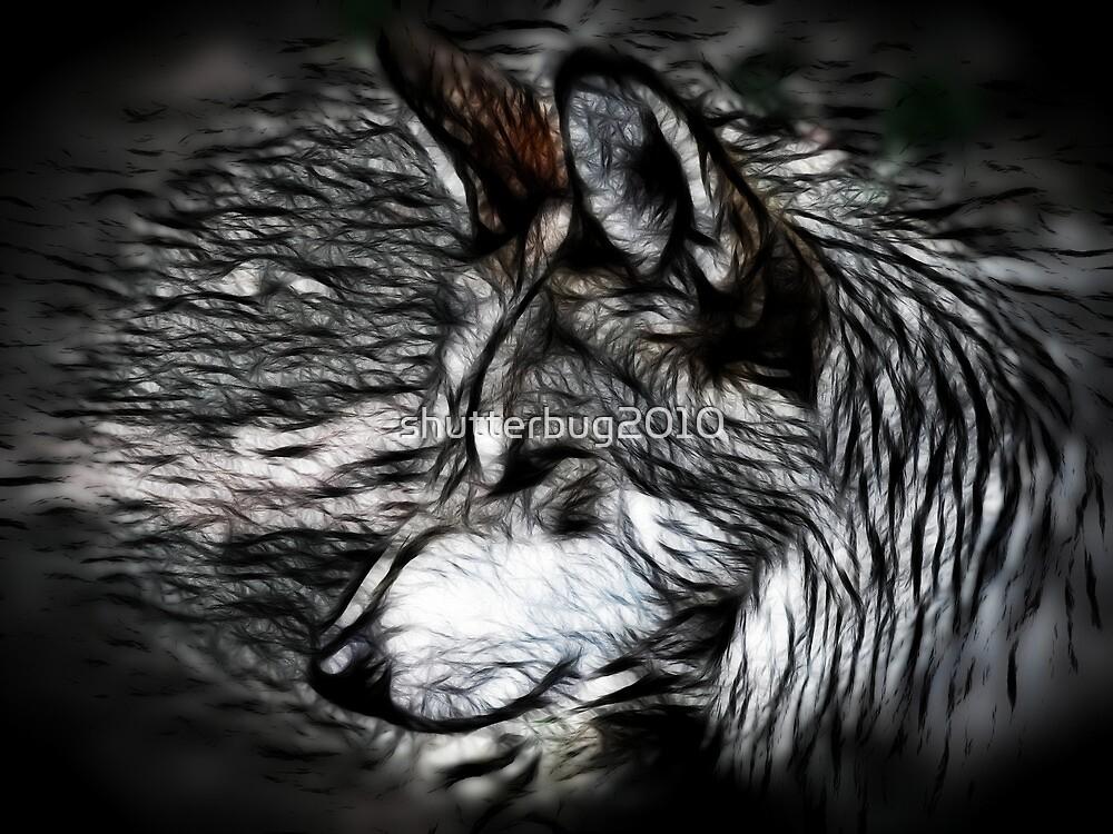 Timberwolf by shutterbug2010