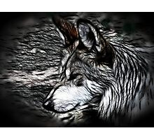 Timberwolf Photographic Print