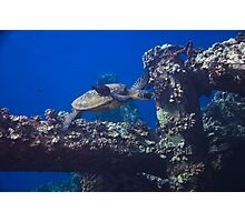 Diving Maui Photographic Print