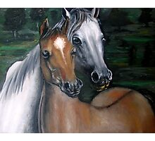 Two horses oil painting  Photographic Print