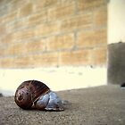 SNAIL SHELL LOVE by thekkeffect