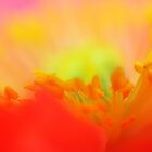Pyschedelic Poppy Sunset... by Lisa Argyropoulos