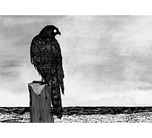 Watchful bird Photographic Print