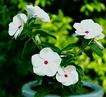 Vincas In Flower Pot by WeeZie
