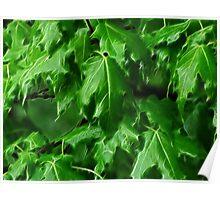 That Maple Spring Freshness.... Poster