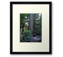 A Walk Among Giants Framed Print