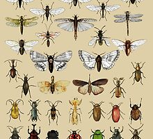 Entomology Insect studies collection  by djrbennett