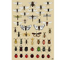 Entomology Insect studies collection  Photographic Print