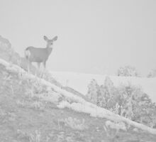 Doe in Fog by Kim Barton