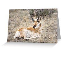 Pronghorn Antelope Greeting Card