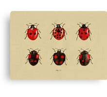 Coccinellidae entomology studies fig. 11 Canvas Print
