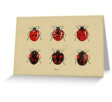 Coccinellidae entomology studies fig. 11 Greeting Card