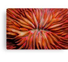 Organic Red Canvas Print