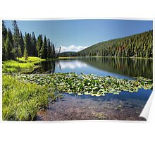 Lily Pond, Yellowstone NP Poster