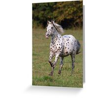 Running Horse Greeting Card