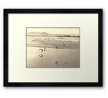 Terns Flight Framed Print