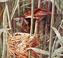 Nesting Reed Warbler Illustration by goldenmenagerie