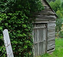 Old Shed,Main Road,Walhalla by Joe Mortelliti
