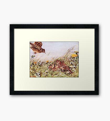 Skylarks In Field Scene Framed Print