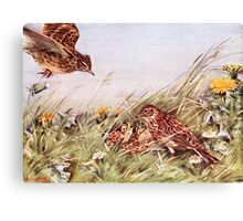 Skylarks In Field Scene Canvas Print