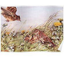 Skylarks In Field Scene Poster