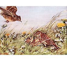 Skylarks In Field Scene Photographic Print